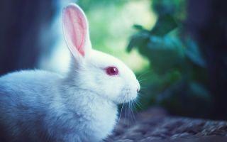 Продолжительность жизни кроликов, как нужно ухаживать и содержать, чтоб увеличить ее срок?