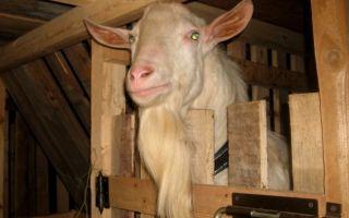 Как построить козлятник своими руками: советы и пошаговая инструкция