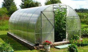 Выращивание в теплице клубники: все о посадке и уходе за растением