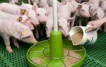 БМВД для свиней: состав, виды и варианты премиксов