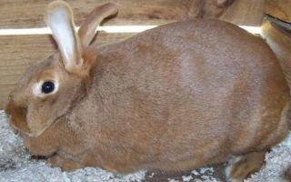 Советы по разведению и содержанию кроликов в домашних условиях, для начинающих и профи
