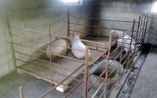 🐷Как подобрать оборудование для прибыльного разведения свиней