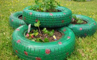 Как посадить клубнику в покрышках: особенности выращивания культуры и декорирования сада