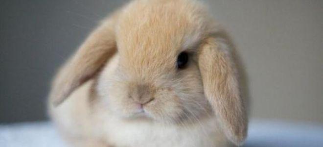 Секреты правильного разведения, кормления и ухода за декоративными кроликами.