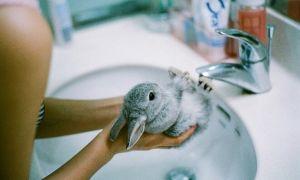 Можно ли купать декоративного кролика: необходимость или гигиена, основные правила ухода