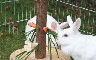 Какие игрушки нужны декоративным и карликовым кроликам: виды, польза и вред, как сделать своими руками