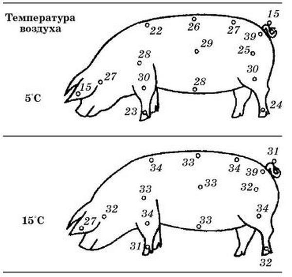 Разница температуры на поверхности тела
