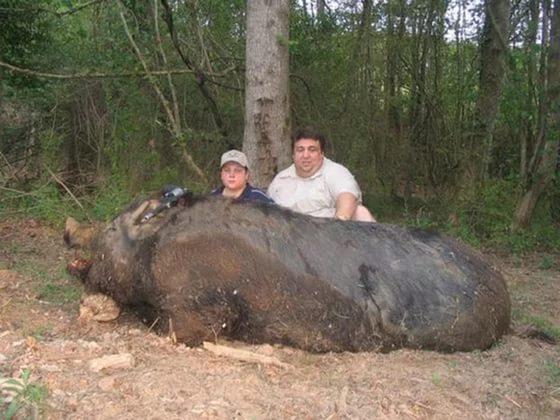 Кабан весом 490 кг