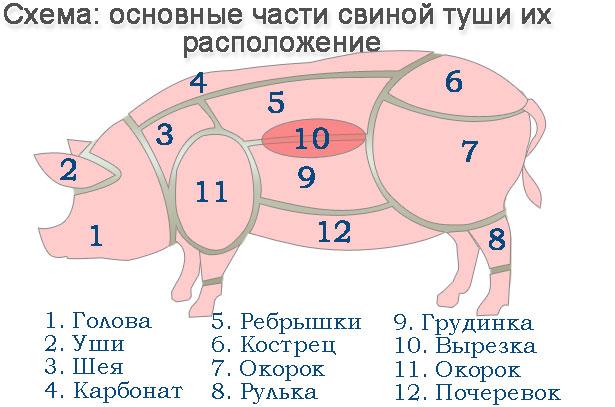 Схема свиной туши для разруба