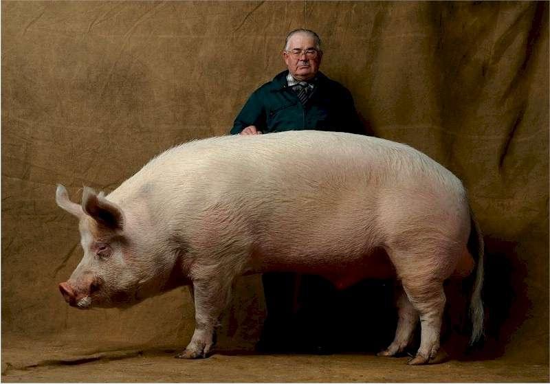 Гигантская свинья Большой Билл