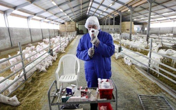 Ветеринар на ферме