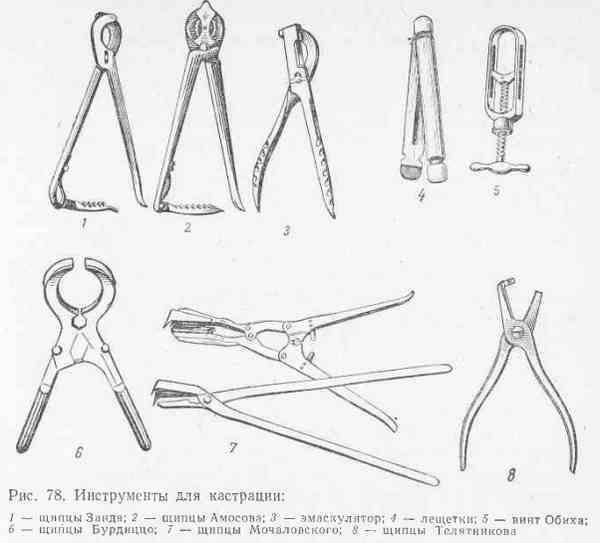 Инструменты для кастрации