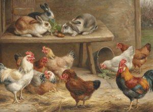 куры вместе с кроликами-2